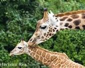 Giraffe kiss print