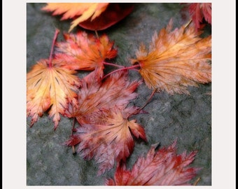 Flower photo, colorful leaves, floral photo, nature photography, autumn photo print