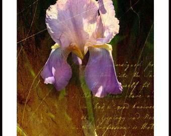 Flower art, florals, Iris, purple flower, floral art print, wall decor, home decor, Iris, flowers