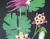 MINIATURE - Columbine (Texas Wildflower Series)