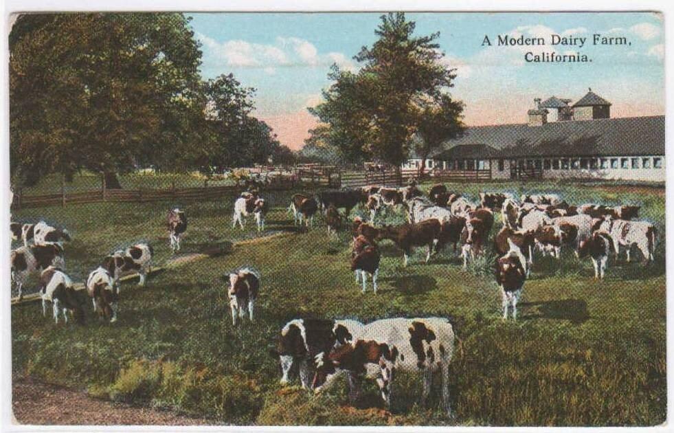 Red G Wagon >> Modern Dairy Farm Cow Cattle Farming California 1924 postcard