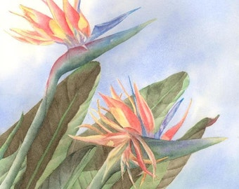Bird of Paradise Watercolor Painting