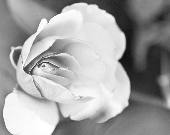 Floral rose Photography dedication love black and white shadows petal for her flower tender gift wedding - Yesterday - fine art photograph