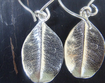Small Boxwood Leaf Earrings -- Nature Cast -- Botanical Jewelry -- Ready to Ship