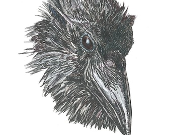 The Reason Why Raven Head Drawing