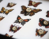 Cabinet of Curiosities Specimen no. 7 -The Scarlet Moth Eye Flies - original 3D insect paintings by Mab Graves