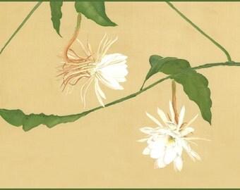 Nighttime Beauty -Cereus I, 11 x 14