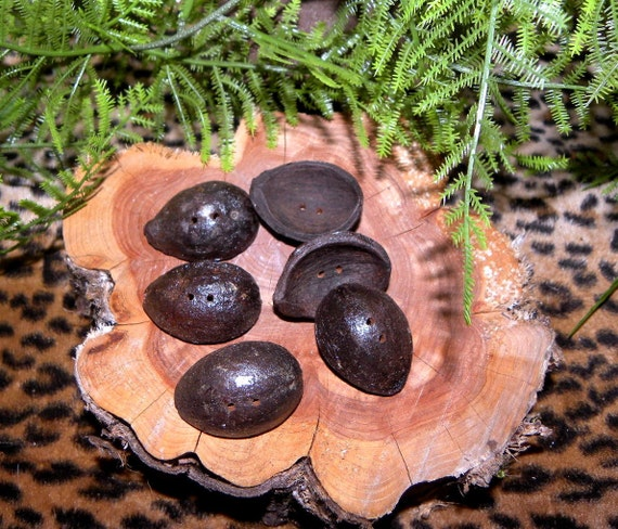 Hickory Nut Toggle Buttons- Set of 6 Beautiful Nut Buttons for sweaters lamps and more