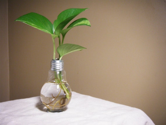 Clear Thinking Lightbulb Vase