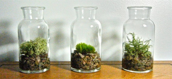Vintage Glass Bottle (plant vase or moss terrarium)