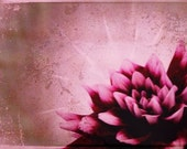 Radiant Dahlia Note Card