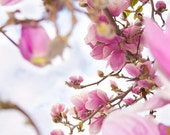 Oriental inspired nature magnolia picture in baby pink. Free domestic shipping.