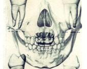Skull Polaroid transfer, Halloween, skull, bones, fine art photography, spooky photo, teeth, dentist, dentistry, home decor, anatomy