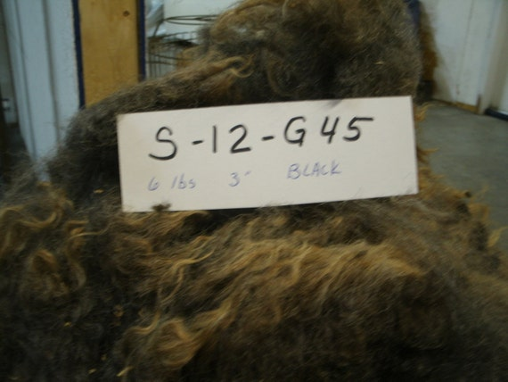 Border Leicester Romney Cross Raw Whole Fleece Sheep Fiber S 12 G45