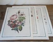 Vintage Botanical Prints - Set of 4