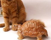 SALE, Tortoise,  A beautiful goldish tortoise, With my beloved cat (-: