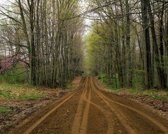 "Four Seasons 8 x 10 Fine Art Prints of ""Tunnel Road"" Parke County, Indiana"