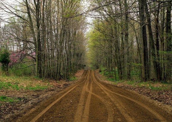 """Four Seasons 8 x 10 Fine Art Prints of """"Tunnel Road"""" Parke County, Indiana"""