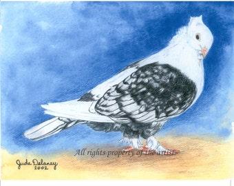 Oriental Frill Pigeon Mini Print