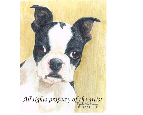 Boston Terrier  Reproduction Mini Print  by Jude Delaney