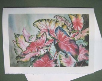 Caladiums Note 5 x 7 note card Card, Greeting Card, Flower Spring Red  pink- bulb  colorful