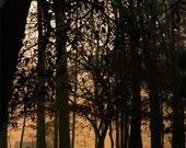Morning Light Series 1 - 8 x 10 - Original Fine Art Photography