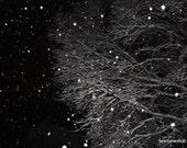 The White Winter Hymnal Tree - 8x12 print