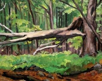 Cathedral Woods. Oil Painting Landscape, Original Oil Painting, 12x24 Strip Framed Plein Air Realist Landscape, Signed Original Fine Art