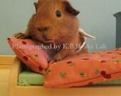 Guinea pig print  - Just made up my bed - nursery decor print 5,5 x 7,7