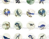 Vintage Blue Birds Collage Sheet for 18mm Charms - Use for Jewelry, Magnifying Domes, Jewelry Making Printable INSTANT Download