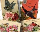 Vintage Bird Postcard Digital Collage Sheet / ON SALE!!! / Digital Download / Victorian Ephemera /  Printable Images / INSTANT Download