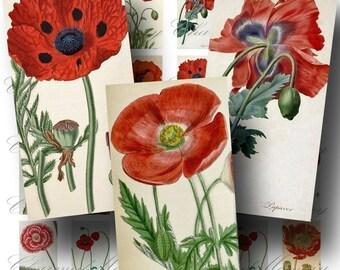 SALE!!!Poppy Digital Collage Sheet - Digital Download - Vintage Botanicals Domino Size -  - Printable INSTANT Download