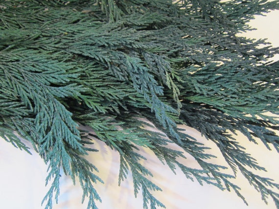 5 Branches Of Preserved Natural Cedar For Art And Crafts