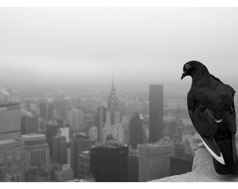 A close model of the absolute processes of fate - black and white photograph print up to 13x19 - pigeon's view of Manhattan, New York City