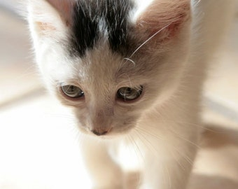 Sunlit Kitten II - 5x7 Fine Art Matted Print (unmatted also available for 15.00)