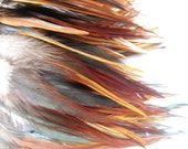 "2 inch strip of Strung Furnace Rooster Saddles FEATHERS Natural color -individual feathers 5 - 5.5"" long."