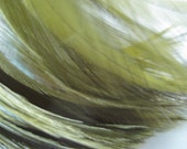 "Three inch strip of OLIVE GREEN Strung Rooster HACKLE feathers - individual feather about 5"" long"