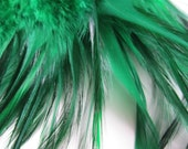 "Selling Out Three inch strip of Green Strung Rooster Furnace Saddles Feathers (individual feather up to 3"" long)"