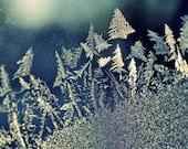 frosty trees - ski22