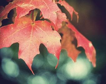 Ahhh, Fall Photograph