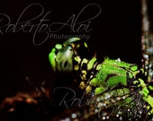 8x12 - Morning Dew - Dragonfly - Fine Art Photography