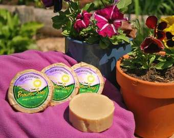 Lavender Soap - 12 Bars Natural Probiotic Shampoo/General Purpose