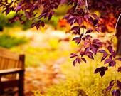 fall photography,autumn photography,fall foliage,burgundy,green,fine art photography,woodland,fall decorations,home decor,fall landscape