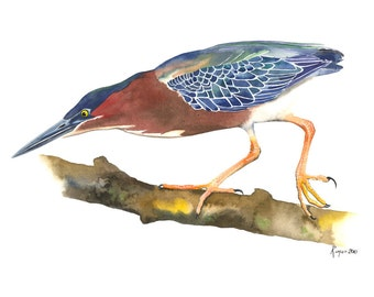 "Limited Edition GICLEE PRINT / ""Balancing Act"" / Watercolor Painting of a Green Heron"