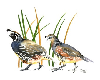 "Limited Edition GICLEE PRINT / ""The Couple"" / Watercolor Painting of California Quail"