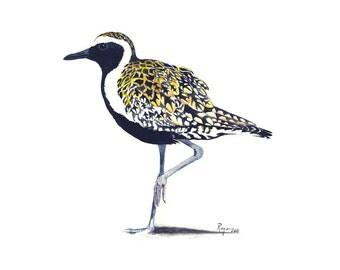 ORIGINAL Watercolor Bird Painting / Pacific Golden Plover / Shorebirds