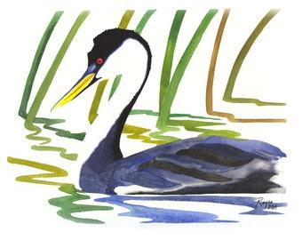 "ORIGINAL Watercolor Bird Painting / ""Western Grebe of Clear Lake"" / Western Grebe"