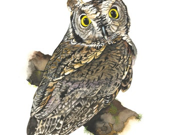 Limited Edition GICLEE MINI Print / Watercolor Painting of a Western Screech Owl