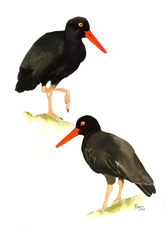 ORIGINAL Watercolor Bird Painting / Black Oystercatchers