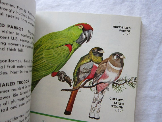vintage book - BIRDS of North America -  A Guide to Field Identification - circa 1966